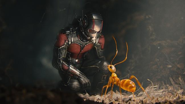 アントマンの蟻が可愛い
