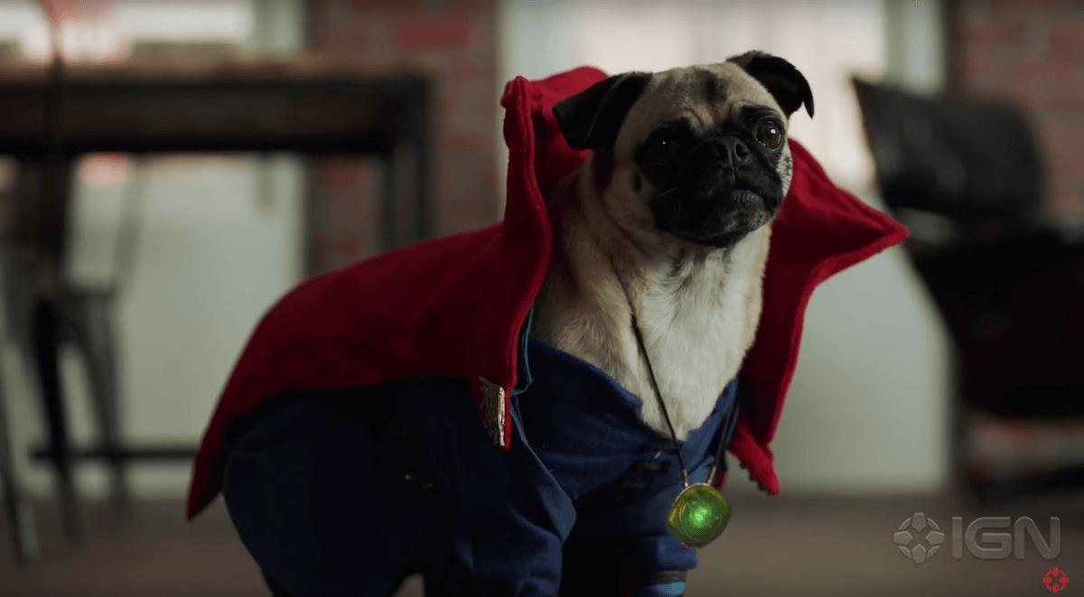 dr-strange-dogs-15