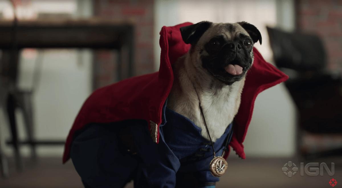 dr-strange-dogs-9