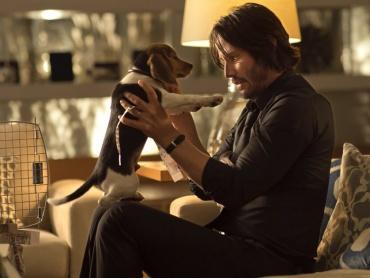 【モチーフで映画を読む】動物編・犬&猫に注目して『マトリックス』『ジョン・ウィック』『抱きたいカンケイ』を観ると?