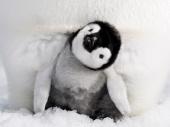 海遊館で開催!映画『皇帝ペンギン ただいま』試写会へ5組10名様ご招待