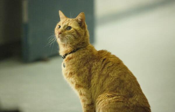 『キャプテン・マーベル』猫のグース