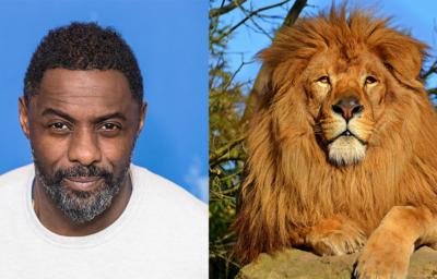 イドリス・エルバとライオン